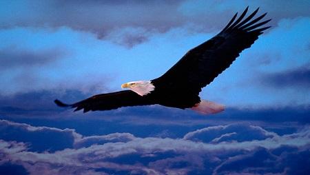 Y tú, ¿por qué vuelas como ave de corral, si puedes volar como las águilas?