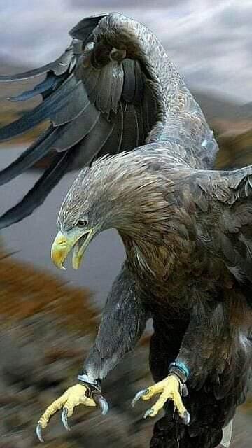 Despertar...es    ¿Porqué el águila no tiene hijos ninis?