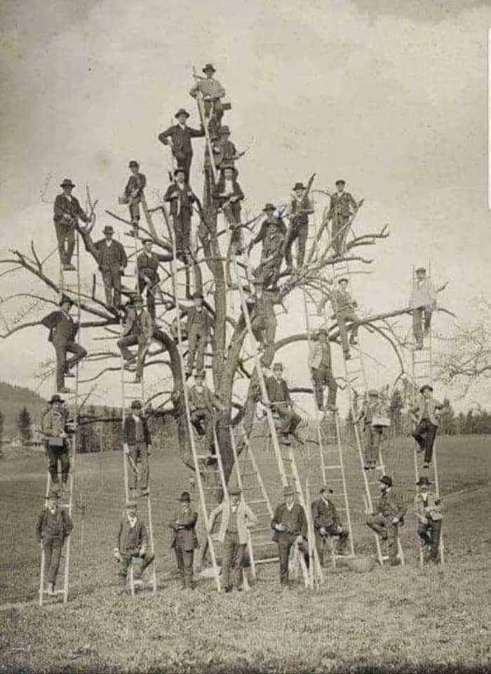 Ancestros