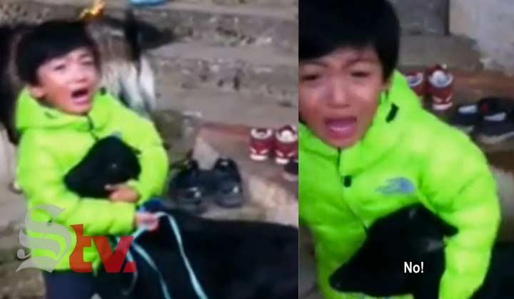 El llanto de un niño salva a una cabra de un sacrificio
