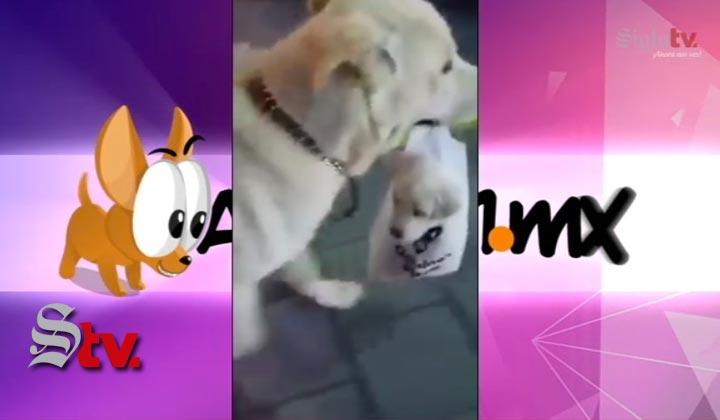 Perrita cargando a su cachorro en bolsa se vuelve viral