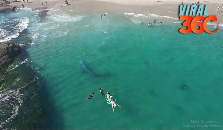 Una ballena de 15 metros espanta a bañistas de una playa