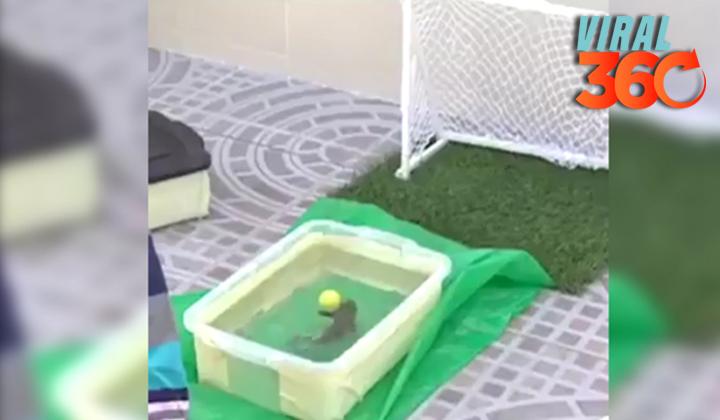 ¡Conoce al pez goleador!