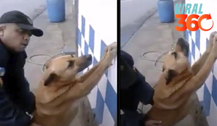 Policía 'inspecciona' a perro como delincuente