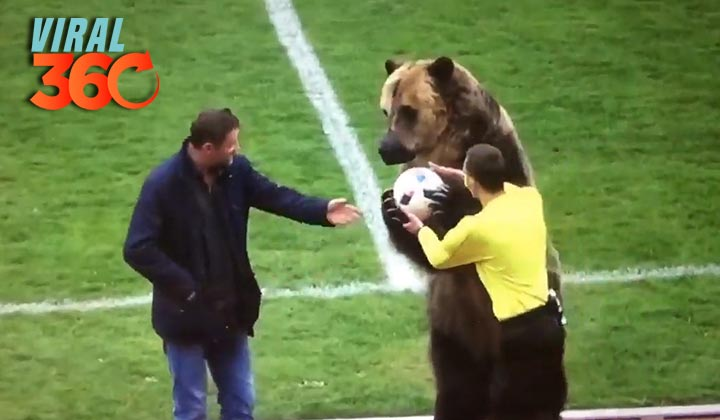 Oso da saque en partido de futbol en Rusia