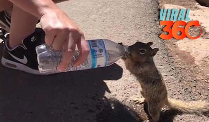 Ardilla sedienta pide agua a turistas