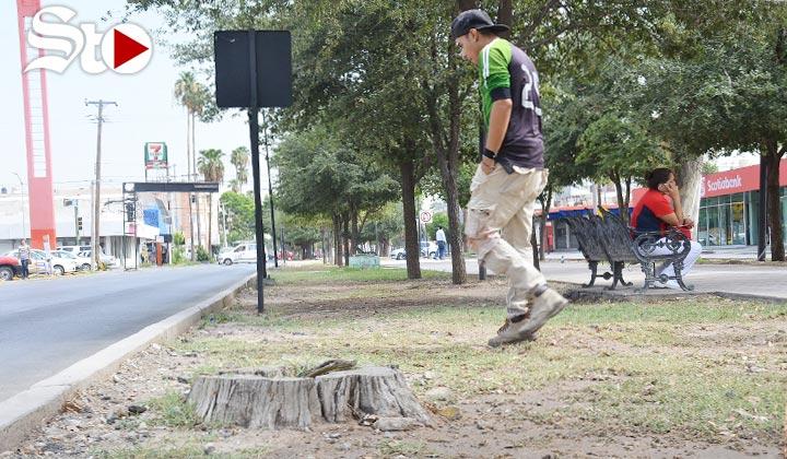 Comparecerán por obras y daños a áreas verdes en la Colón