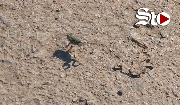 Atienden plaga de ranas en Gómez Palacio