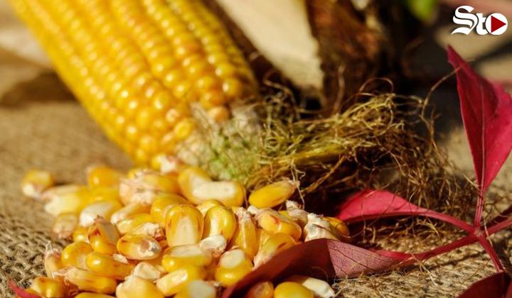 Dietas indígenas para no enfermar