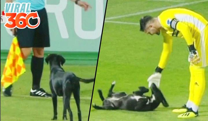 Un perro se entromete en un partido de futbol