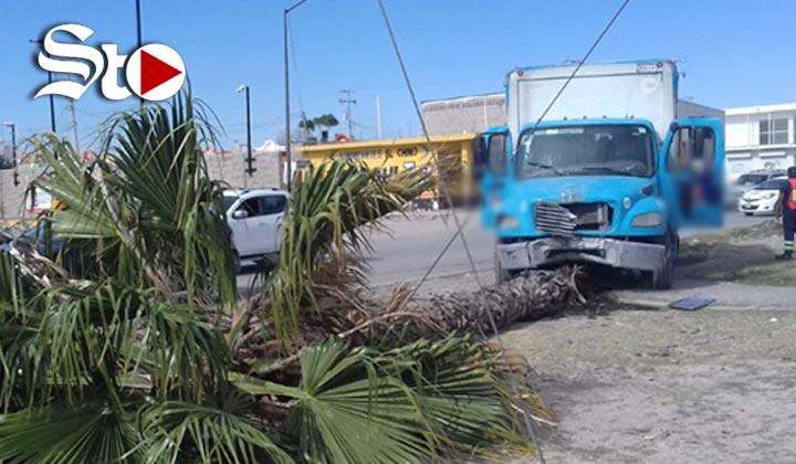 Camión con cerveza se queda sin frenos y derriba una palma