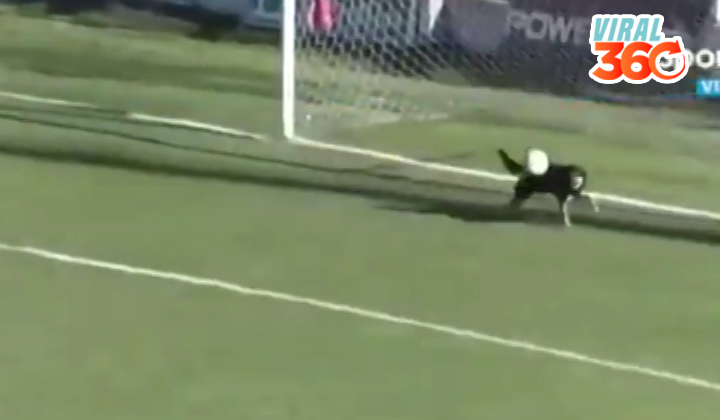 Un perro logra tapar un gol del equipo rival
