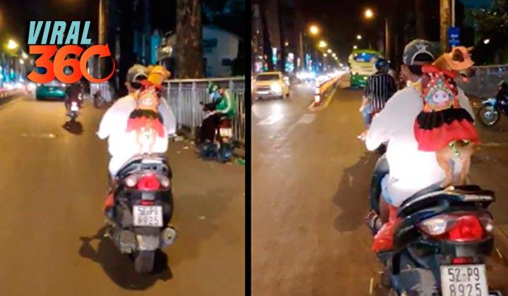 Perrita enamora con su manera de viajar en motocicleta