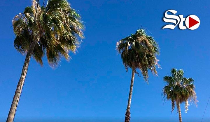 Vientos alcanzan los 61.2 km/h en La Laguna