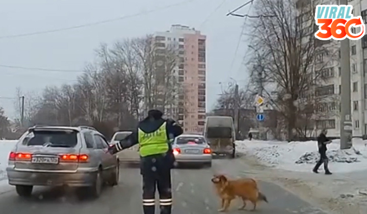 Policía detiene tráfico para dejar pasar un perro