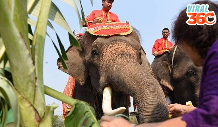 Intentó abrazar a un elefante y provocó el caos