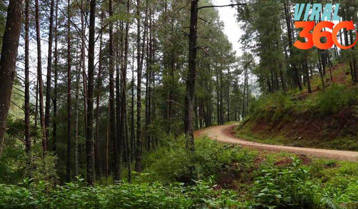 ONU piden cuidar los bosques en el Día Internacional