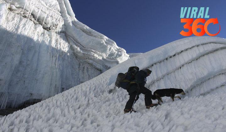 Perrita callejera, la primera en conquistar el Himalaya