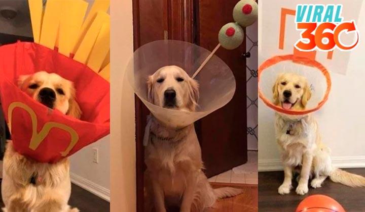 Se divierten creativamente con el cono de su perro