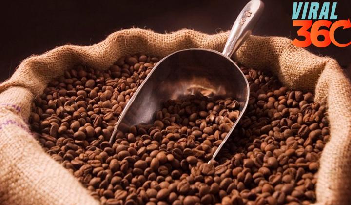 Chiapas vive crisis del café que hace migrar a los campesinos