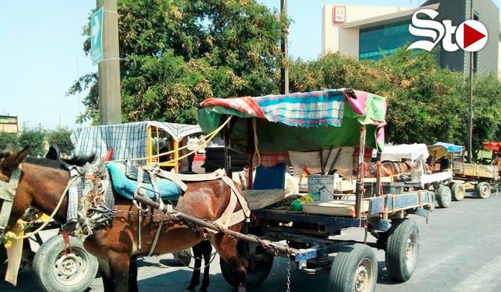 Se manifiestan carromateros en la Plaza Mayor de Torreón