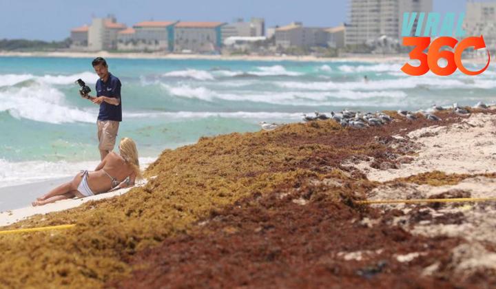El aumento de sargazo afecta el turismo en el Caribe mexicano
