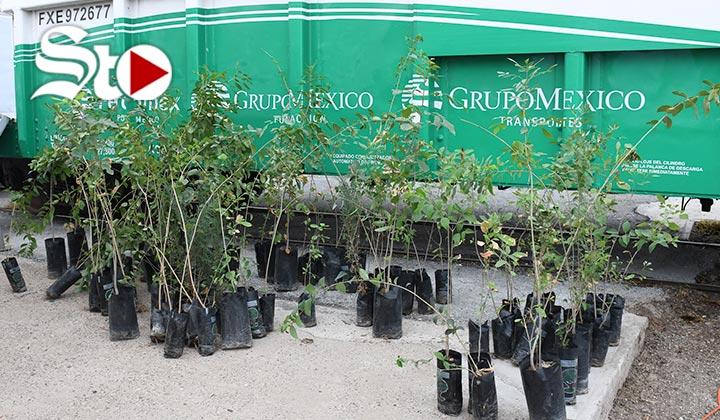 Fundación Grupo México dona 22 mil árboles a Torreón