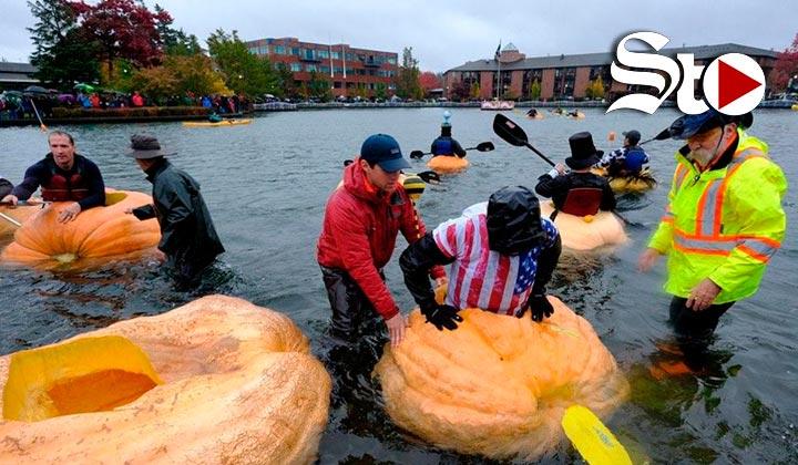 Regata de calabazas gigantes marca inicio del otoño en Oregón