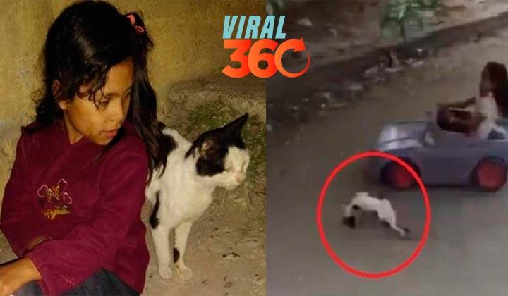 Dafne, la niña que atropelló al gato