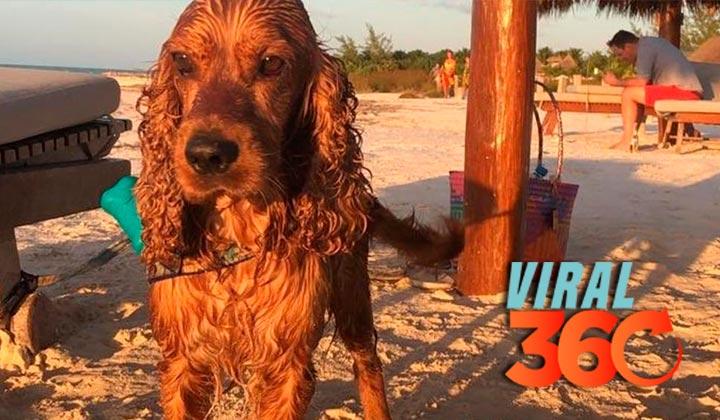 'Simón', el perro que se volvió tendencia por su viaje al Caribe