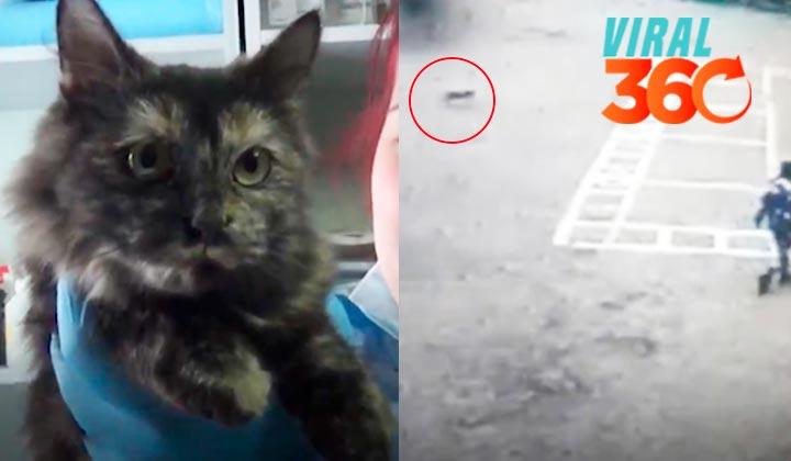 Detienen a traficante de drogas felino