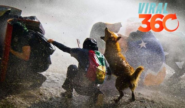Perro protestante en Chile se gana la atención de miles