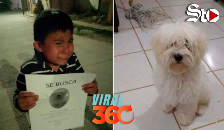 Niño conmueve al buscar por las calles a su perrito perdido