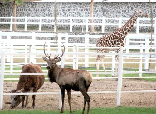 Incautan Rancho De Lujo El Siglo De Torreón