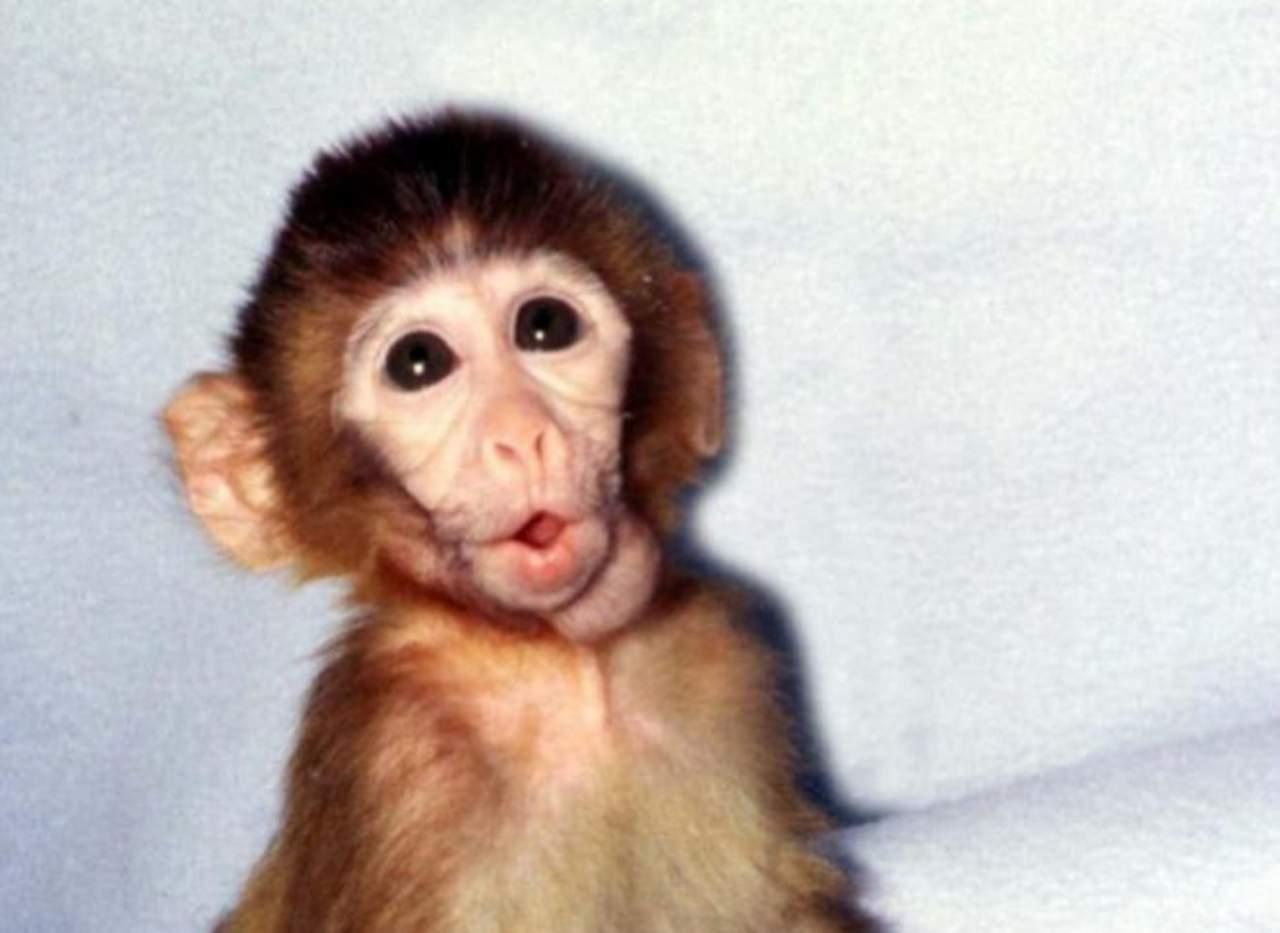 ANDi, el primer primate genéticamente modificado