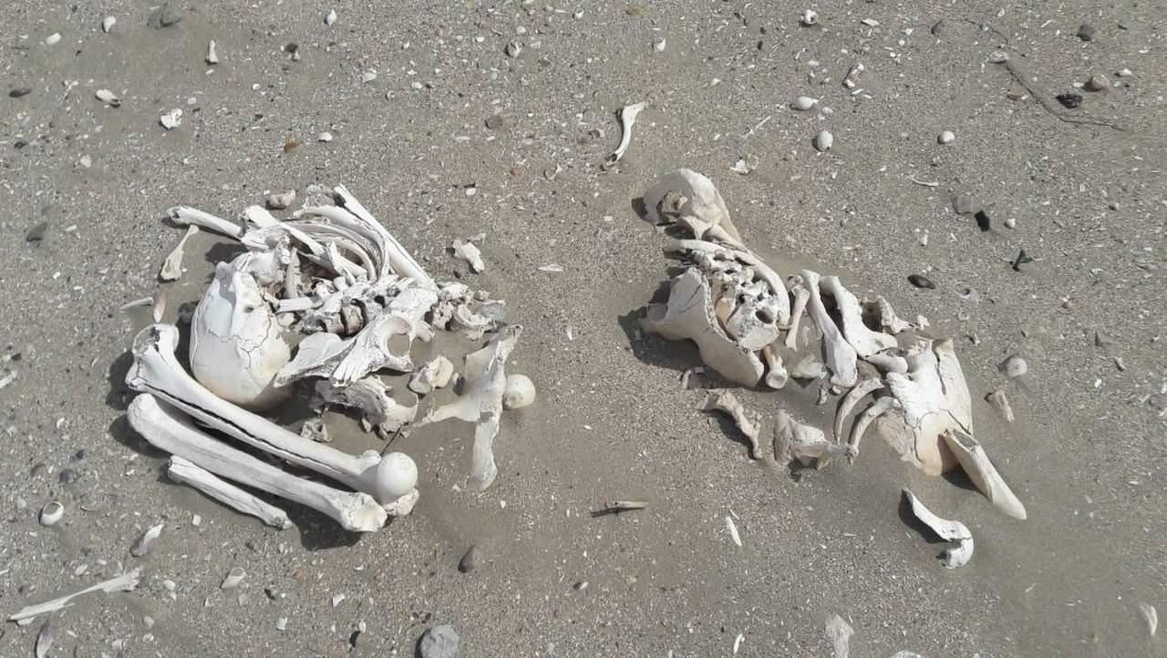 Descubren huesos humanos en playa de Argentina. Noticias en tiempo real