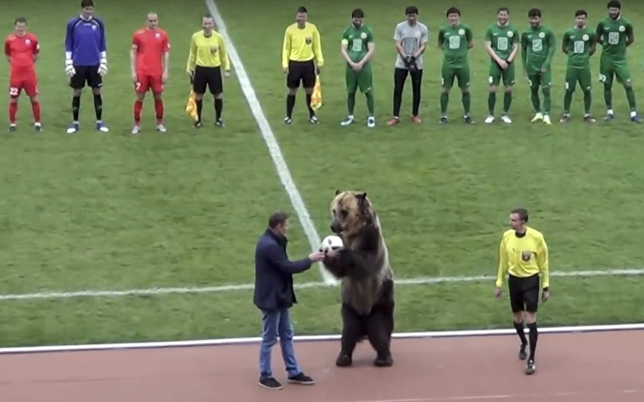 Critican empleo de oso antes de partido de futbol en Rusia. Noticias en tiempo real