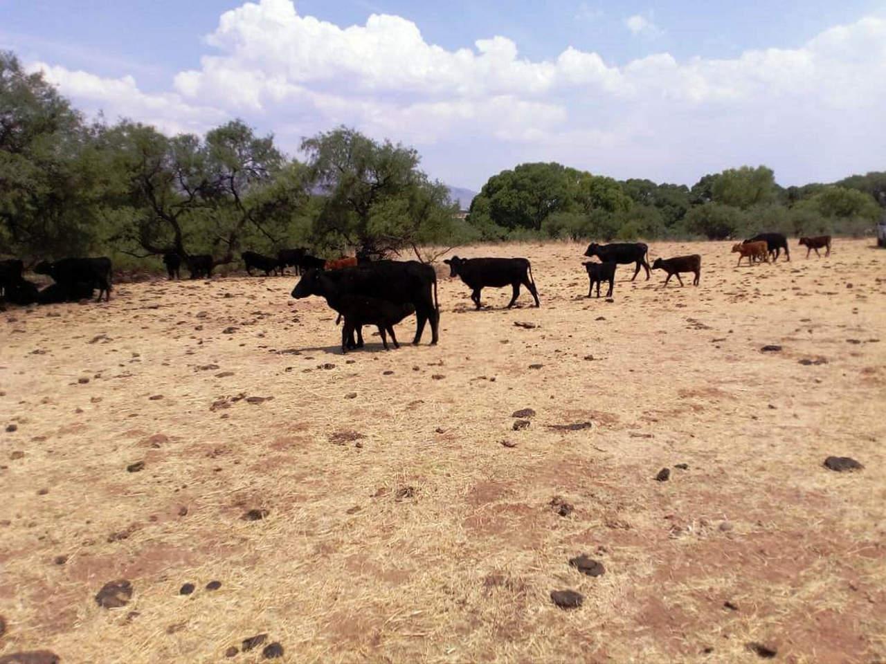 Aseguran cuatro ranchos a César Duarte. Noticias en tiempo real