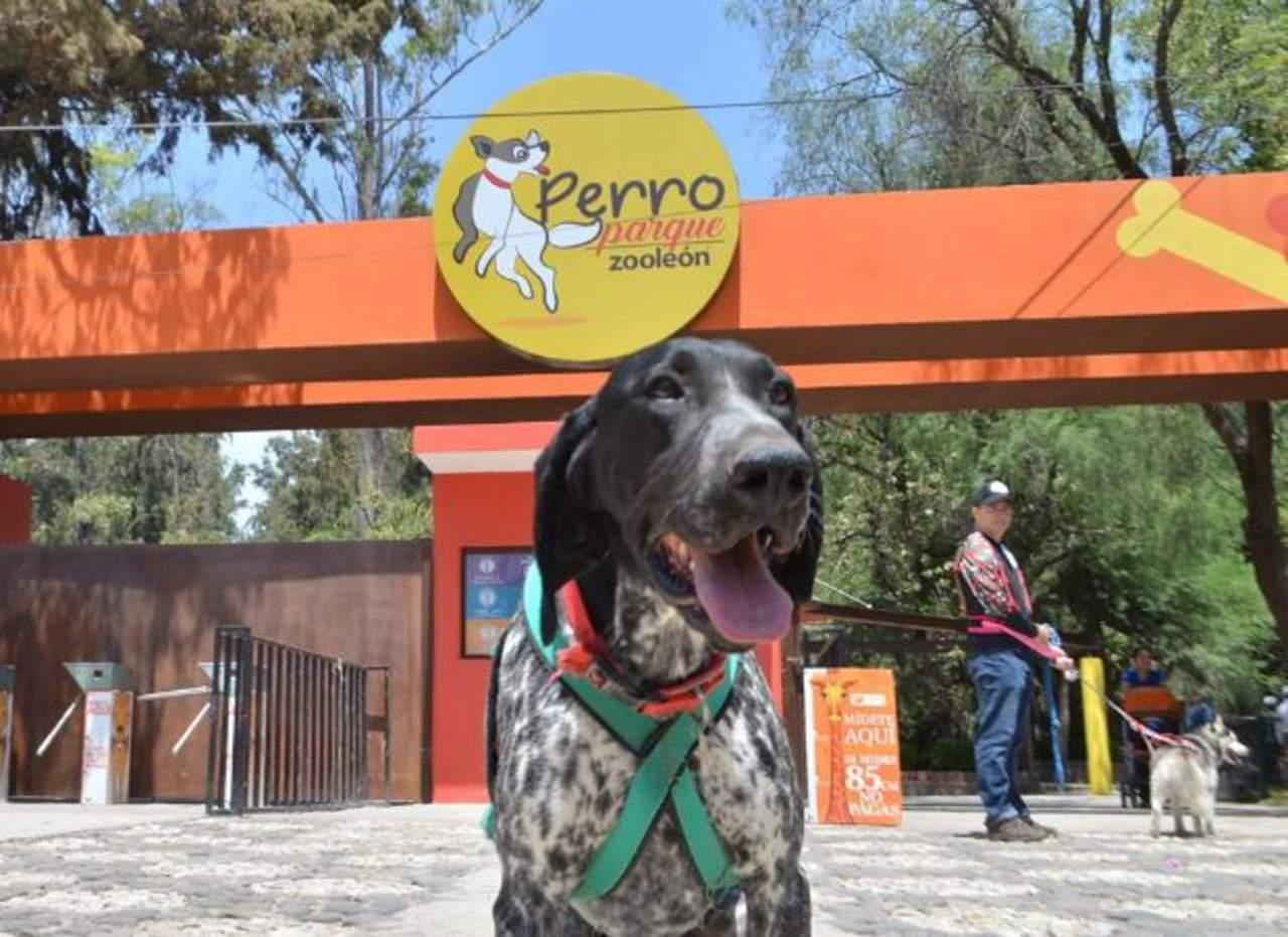 perro parque en León
