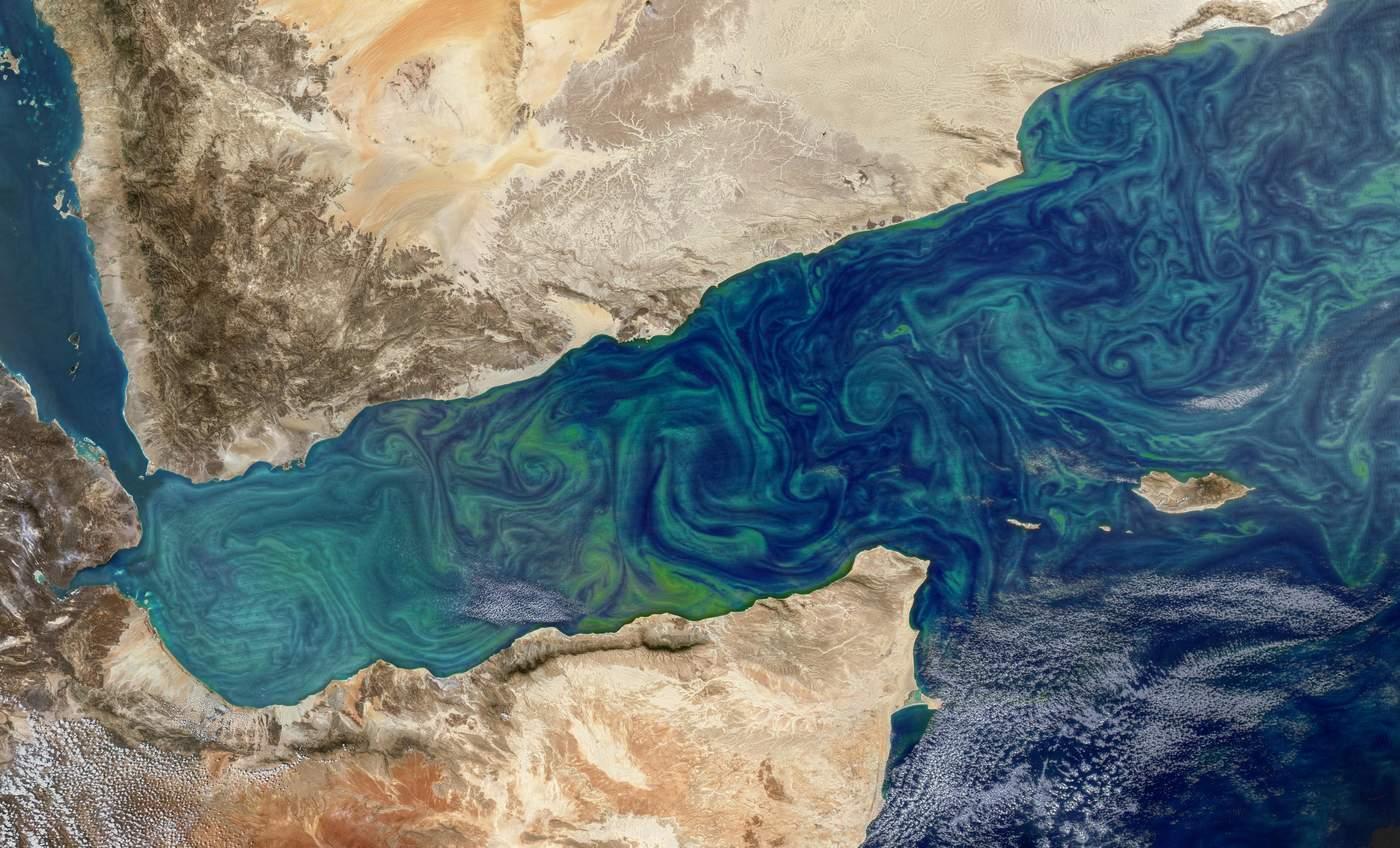 Necesario, estudio profundo del fitoplancton. Noticias en tiempo real
