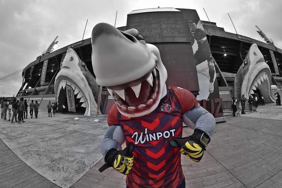 Comienza la disputa por los Tiburones Rojos. Noticias en tiempo real