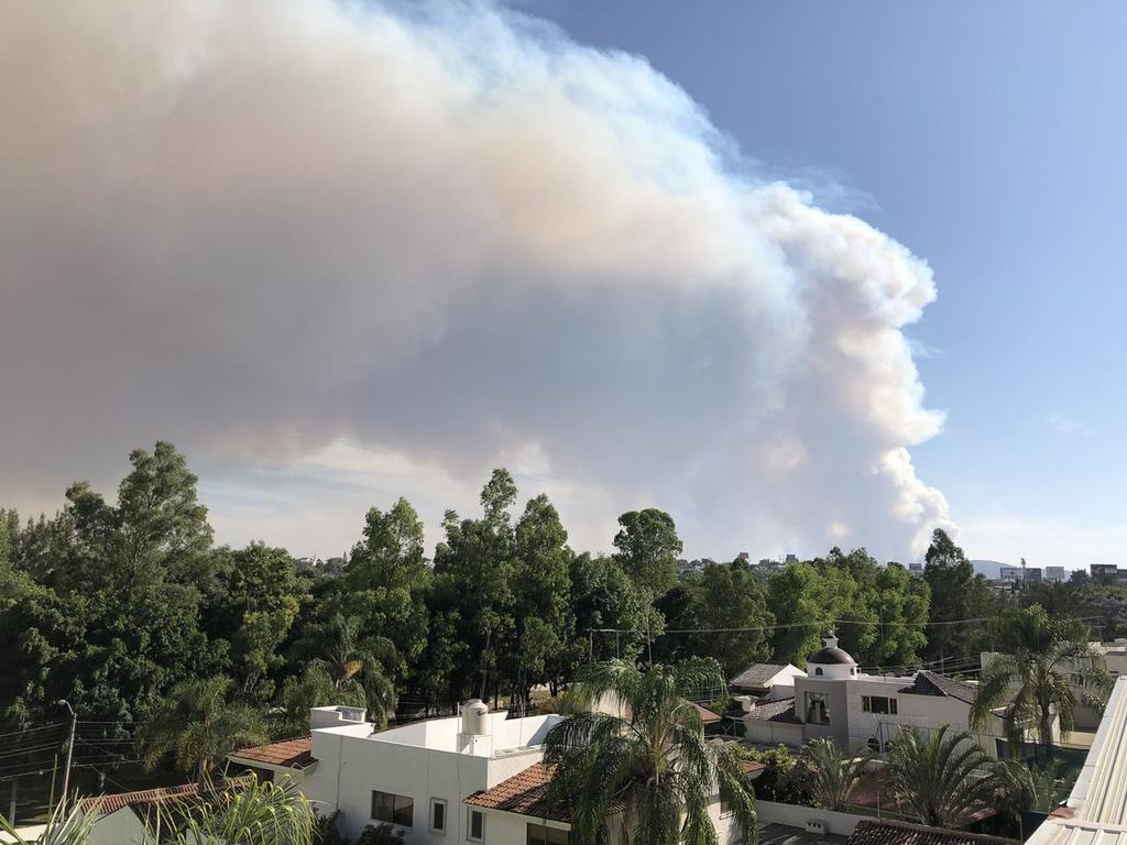 Regresa fauna tras incendio en Bosque La Primavera. Noticias en tiempo real