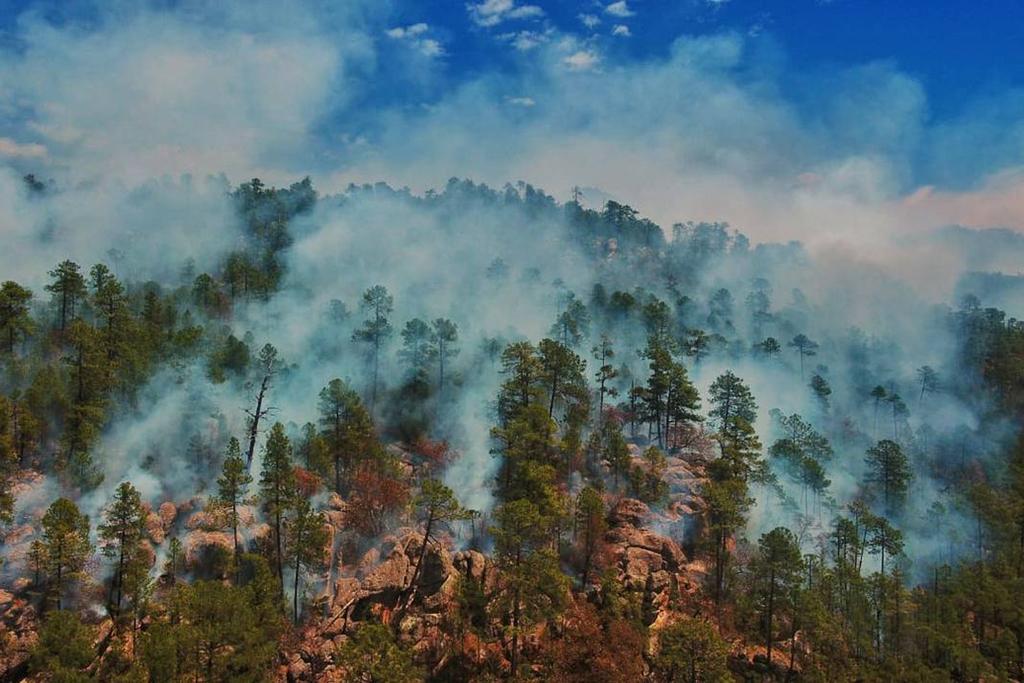 Reportan posibles incendios forestales