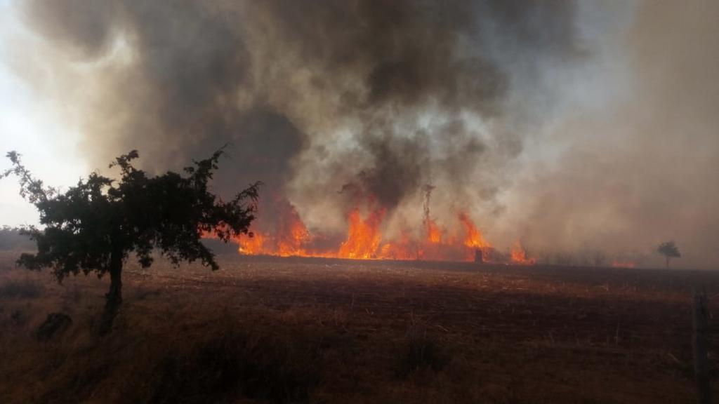Realizan sobrevuelos en área afectada por incendio en Saltillo. Noticias en tiempo real