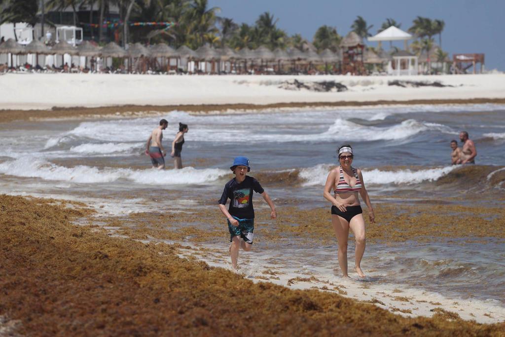 ¿Qué es el sargazo y en qué playas mexicanas se encuentra?. Noticias en tiempo real