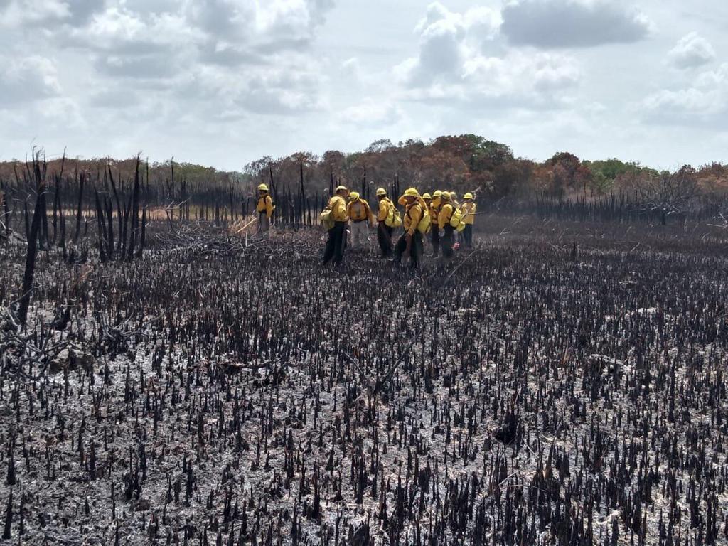 Controlan 55% del incendio en reserva de Quintana Roo. Noticias en tiempo real