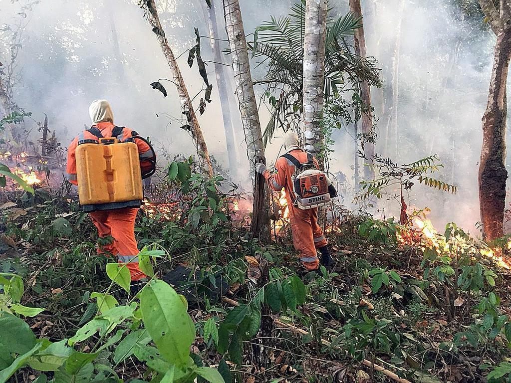 Confirma Chile ofrecimiento de ayuda a Brasil por incendios en el Amazonas. Noticias en tiempo real