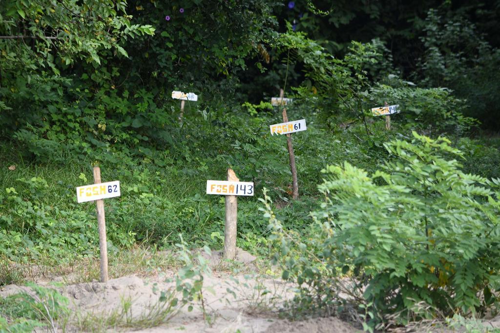 Ordena SCJN entregar información sobre fosas clandestinas de Veracruz. Noticias en tiempo real