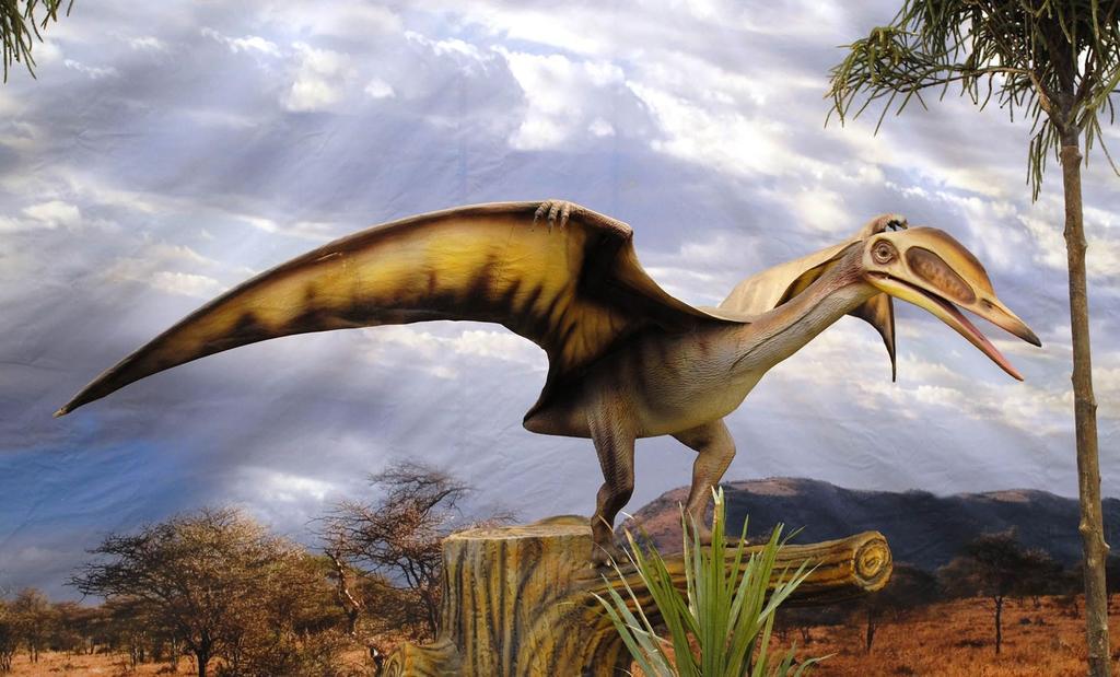 Nueva especie de pterosaurio encontrado entre fósiles de museos.