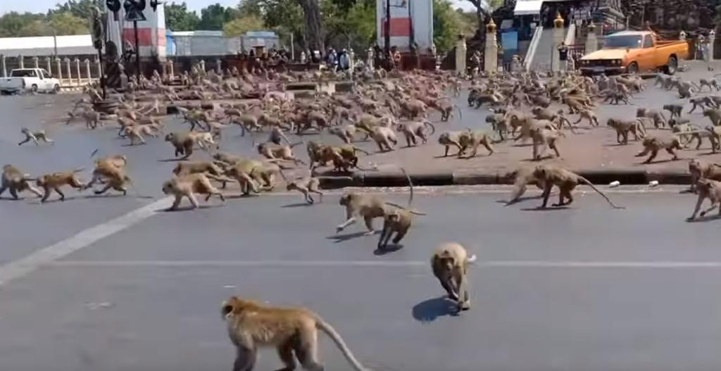 Resultado de imagen de 12 MONOS ANIMALES EN LAS CALLES